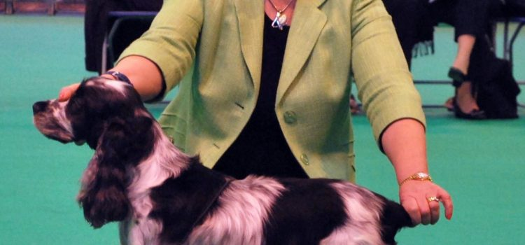 Daisy won Best Veteran Bitch at Crufts 2017