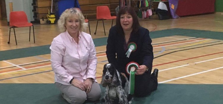 Daisy won Best Veteran Bitch at North Wales Cocker Club Championship Show in October 2016